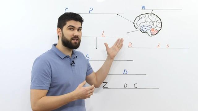 Creierul si obiceiurile